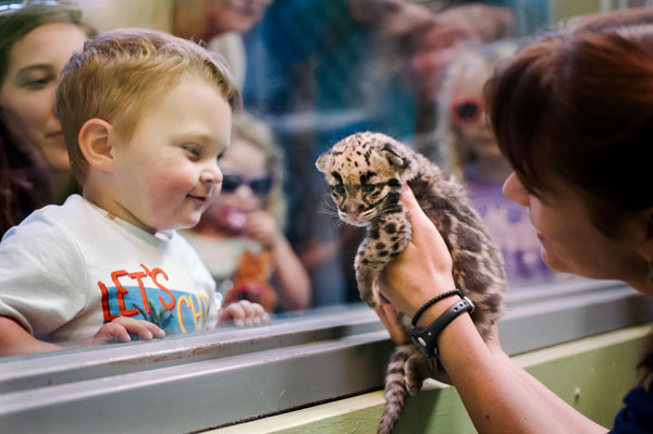 Toddler looking at a baby cheetah